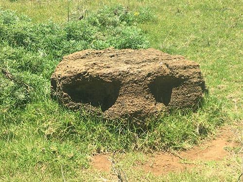 Tete de Moai enterree - Presqu'ile de Rapa Nui - Poike